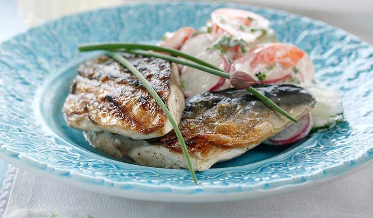 Grillet-makrell-med-sommersalat