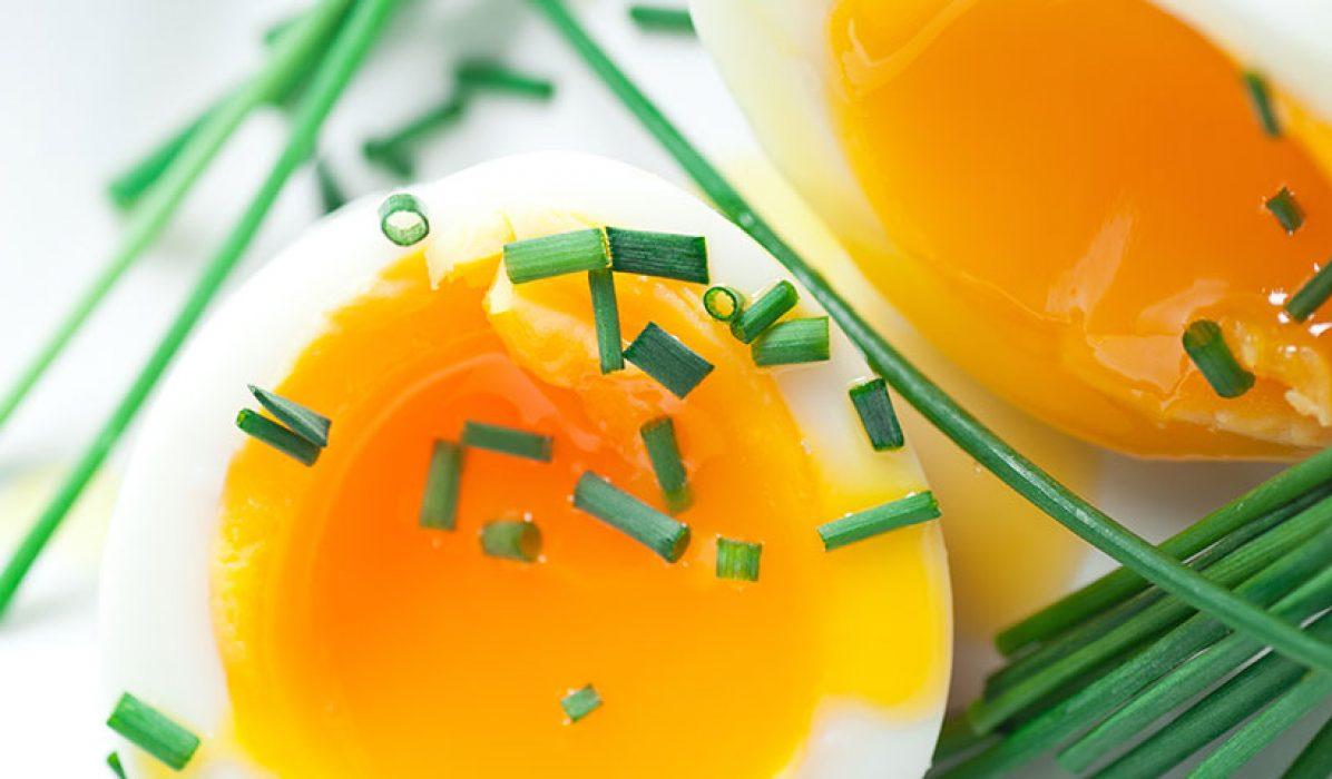 Litt-om-egg