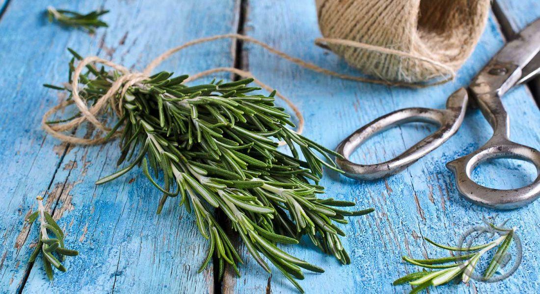 tips-krydder-og-urter